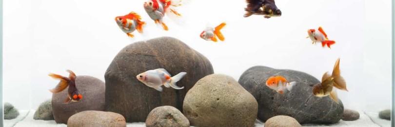 Знак зодиака Рыбы и его талисманы