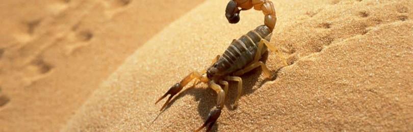 Подбираем талисман для женщины и мужчины Скорпиона